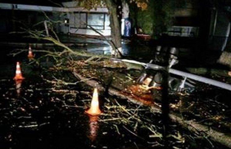 У Хмельницькому вночі дерево зламало світлофор