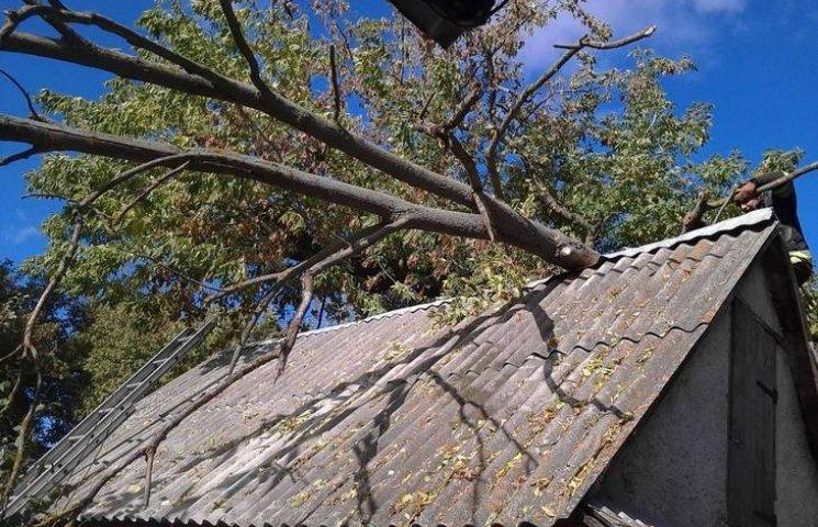 В Ізяславі дерево ледь не зруйнувало будинок