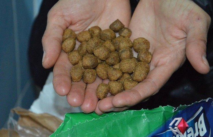 Пронос та блювота з піною: чим годують в миколаївському Центрі захисту тварин