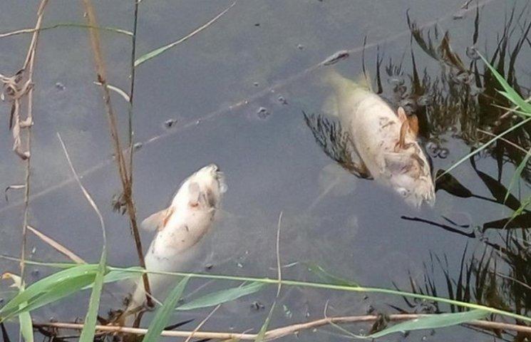 На Вінниччині через відходи спиртового виробництва масово гине риба
