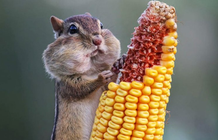 40 самых смешных животных с конкурса Comedy Wildlife Photography Awards 2016