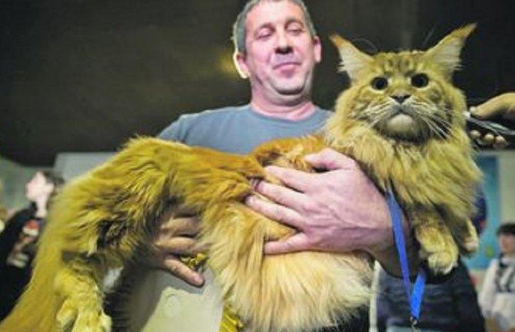 Найбільший кіт Києва підірвав мережу