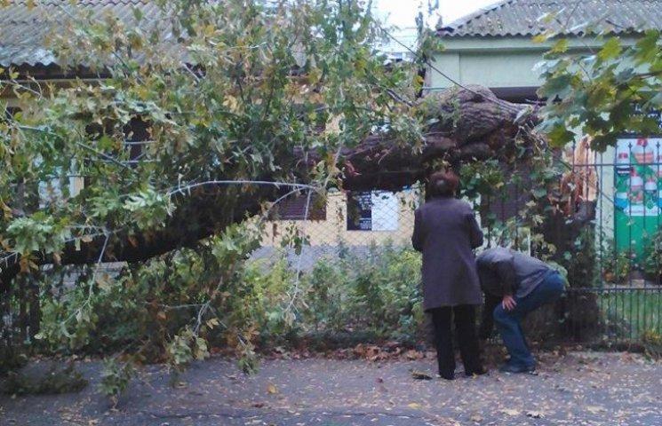 У центрі Миколаєва через негоду впало дерево