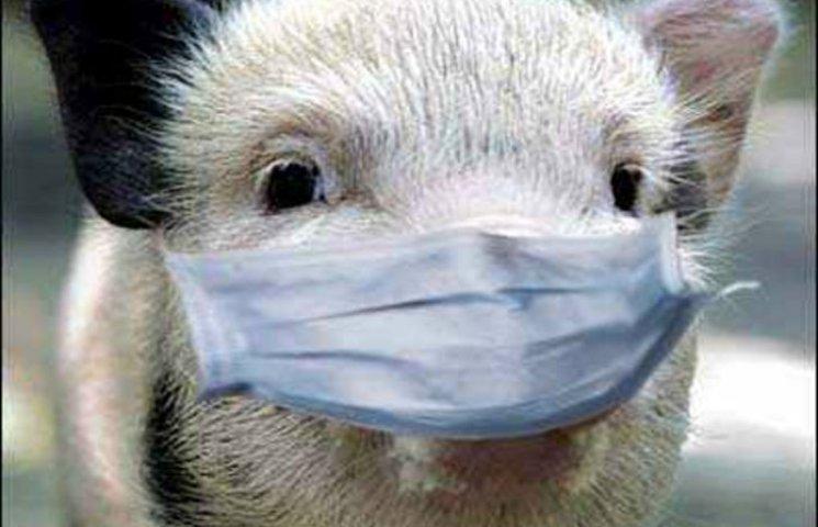 На Харківщині чума свиней: знищили ще кілька десятків тварин