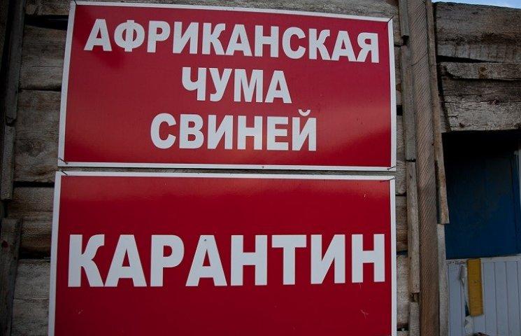 На Миколаївщині в зоні спалаху чуми знищили вже 50 свиней