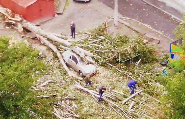 Буря у Миколаєві: Вивернуті дерева, понівечені машини та скрючені білборди