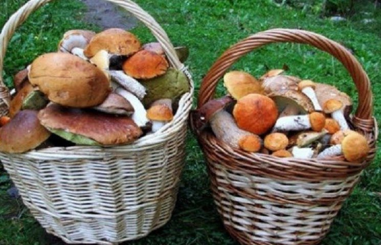 Миколаївське подружжя отруїлось цюрупінськими грибами