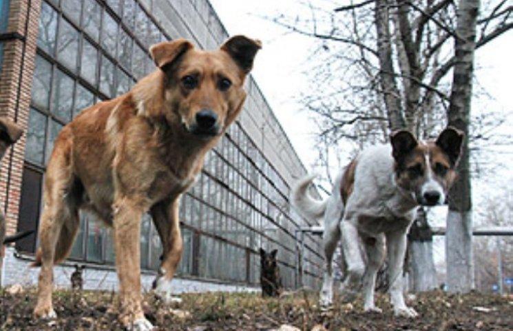 За ширмою гуманності: як у Миколаєві пси жеруть людей та котів