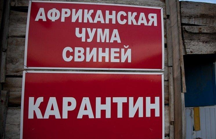 """Купил мясо на базаре: На Полтавщине - вспышка """"свиной"""" чумы"""