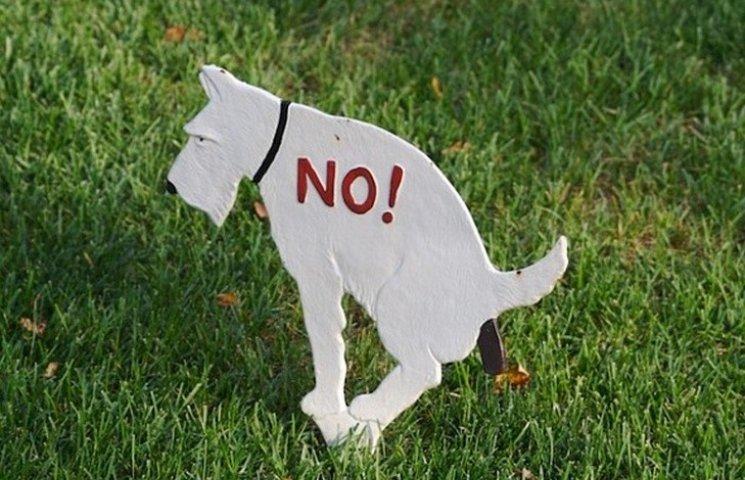 Вінничани закликають штрафувати власників тварин, які не прибиратимуть за своїми улюбленцями