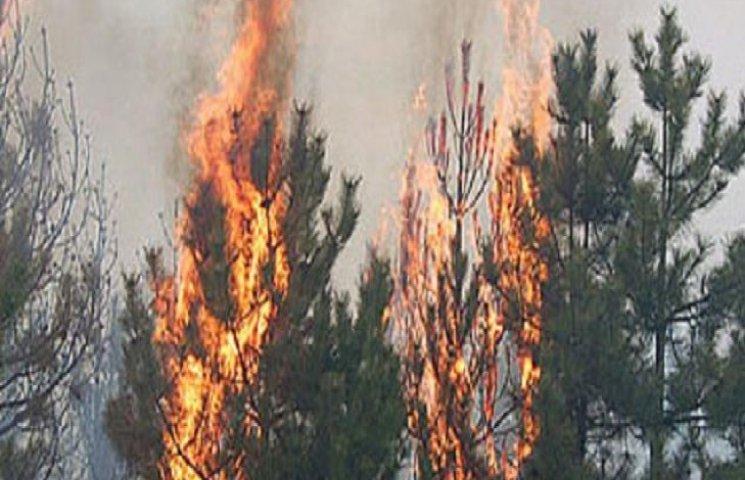 На Хмельниччині торік сталося майже півсотні лісових пожеж