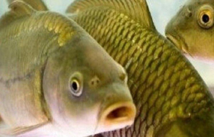 Риба готується до зими разом з Хмельницькрибохороною