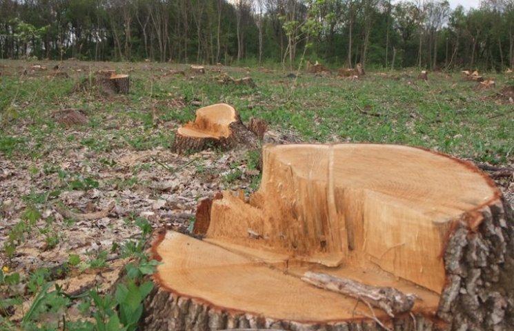 Держпідприємство на Хмельниччині незаконно рубало ліс