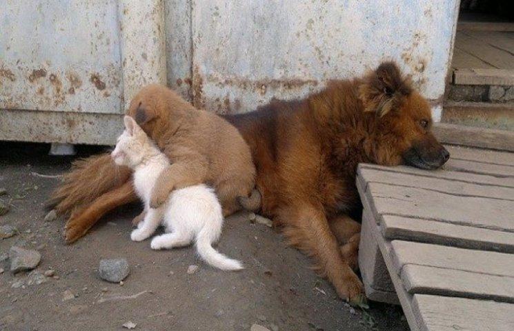 "У Хмельницькому створили комунальну ""Надію"" для тварин"