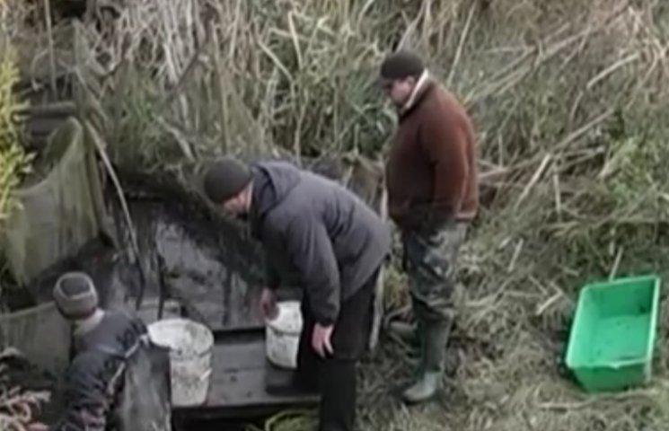 На Полтавщині у річку Хорол випустили понад 20 тисяч малька