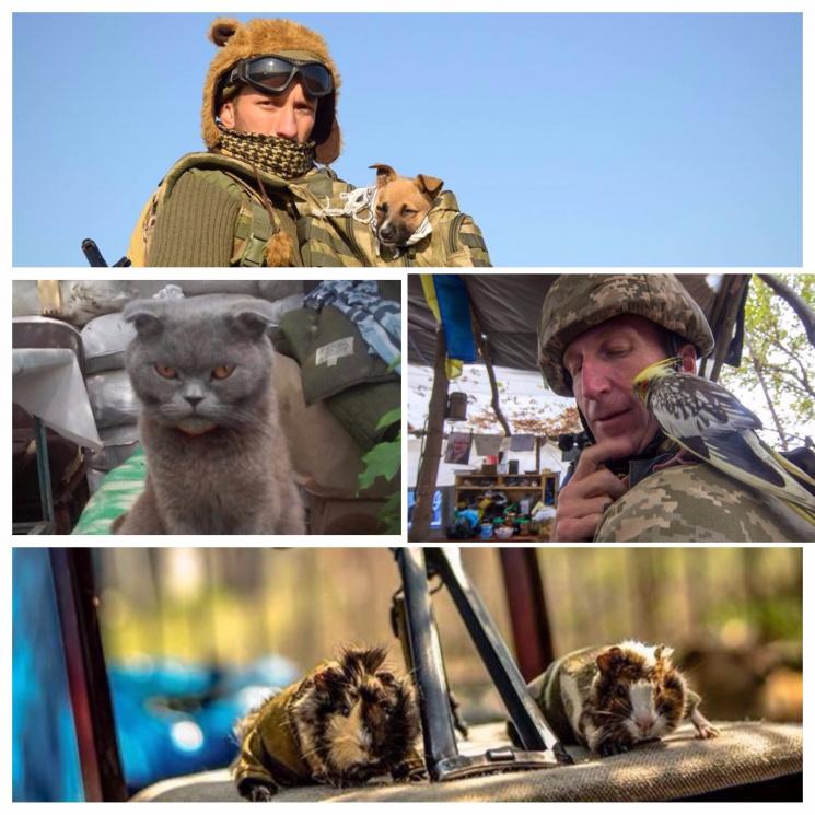 Тварини – герої АТО: 10 смішних, повчальних та сумних історій про друзів військових