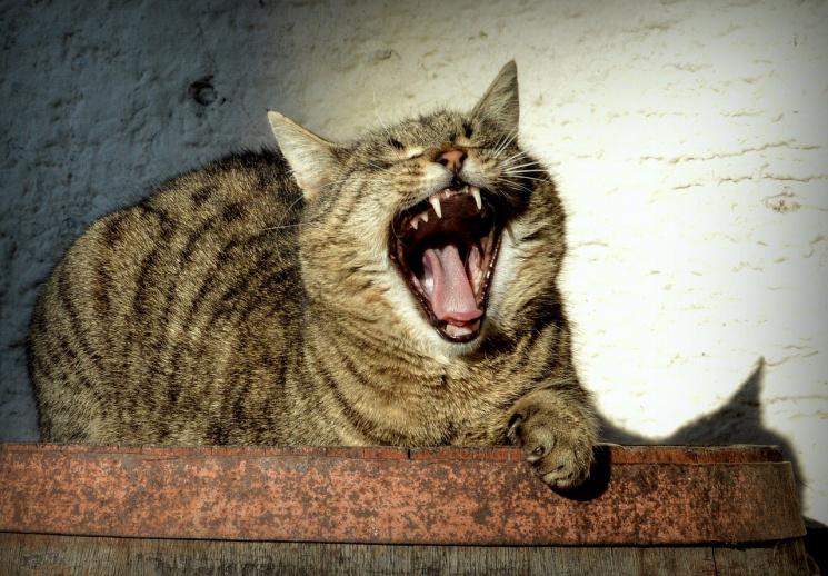 На Ровенщине бешеные коты терроризируют…