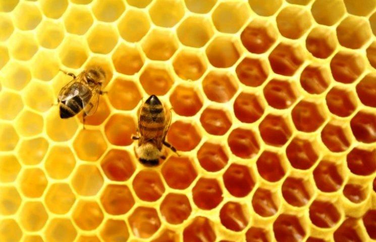 """Чому 10 жовтня, у """"солодкий"""" день, без меду не обійтися"""