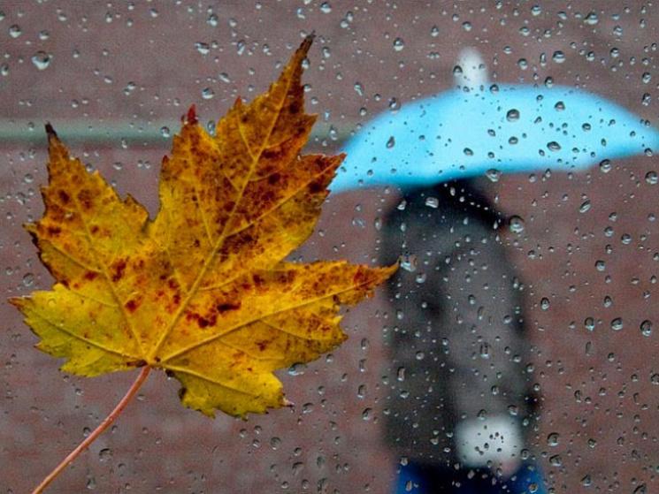 Чого чекати від погоди 12 жовтня: Сумчанам доведеться запастись парасольками