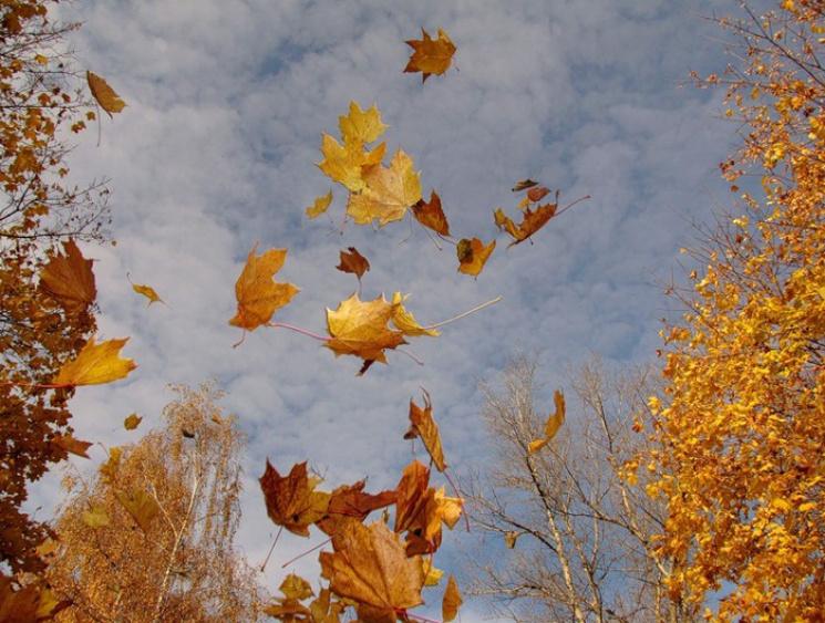 Синоптики попередили про сильний вітер уКиєві