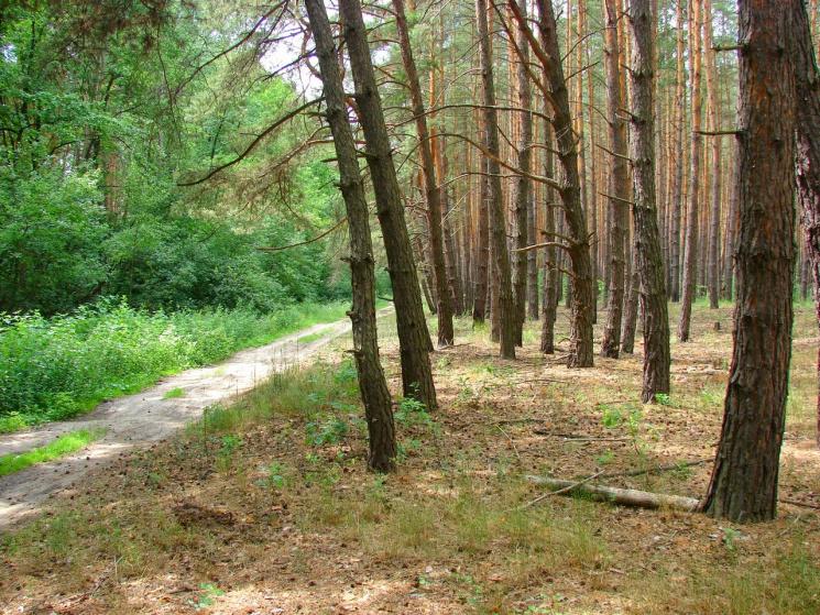 У лісі під Харковом знайшли труп політв'язня режиму Януковича, - нардеп (ФОТО)