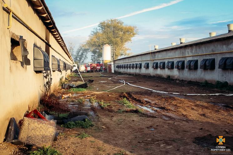НаТернопільщині під час пожежі загинули десятки тисяч курчат