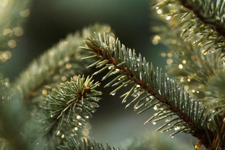 У Сумах на Новий рік встановлять ялинку за півтора мільйона