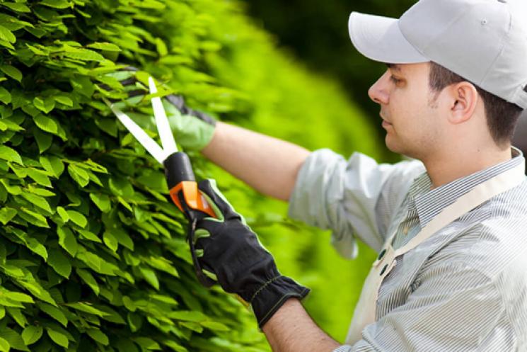 термобелье ищу садовника в фирсановке теперь