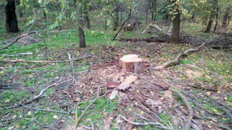 """На Полтавщині затримали """"на гарячому"""" нелегального лісоруба"""
