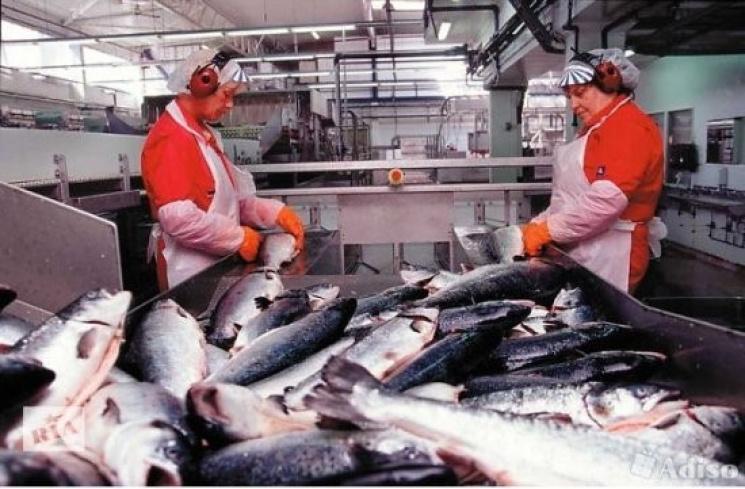 работа воронеж рыбное производство комнат Невском
