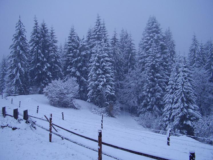 Зима не відступає: вночі Прикарпаття притрусило снігом (відеофакт)
