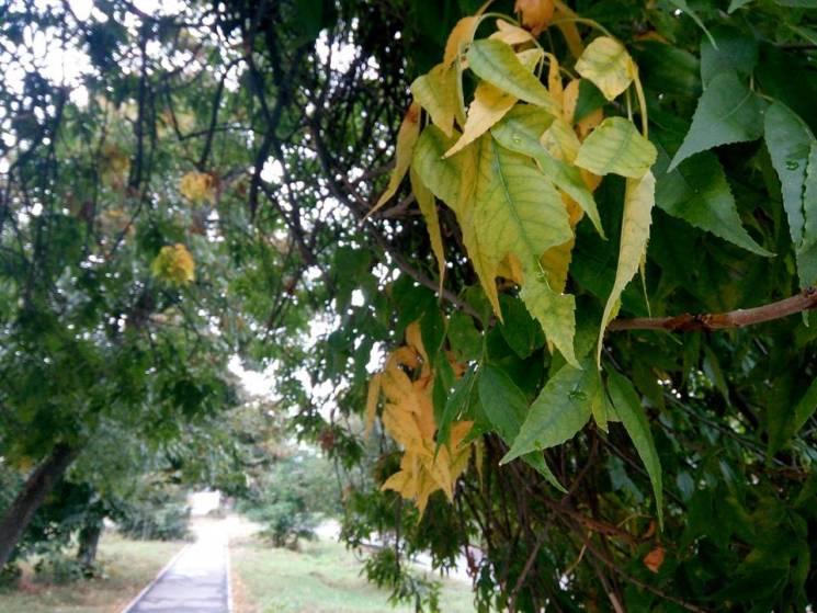Хмарний день та ранковий дощ: Якої погоди чекати у Черкасах 3 жовтня