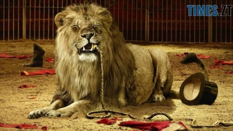 У Житомир не пускатимуть цирки з тваринами