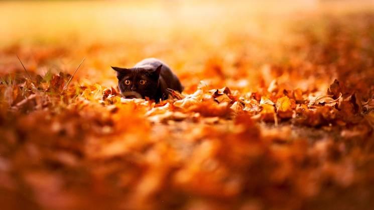 Що четвертого жовтня обіцяє благополуччя і багато грошей та до чого тут чорний кіт
