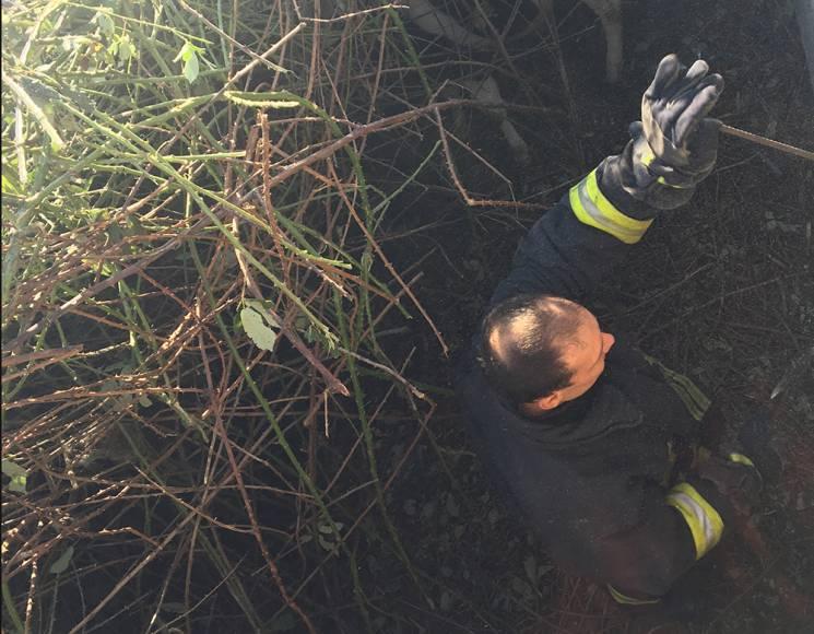 У Миколаєві рятувальники допомогли дістати з пастки корову (ФОТО)