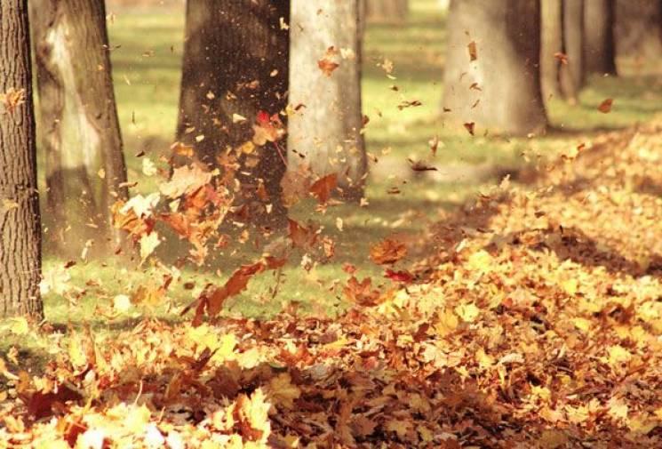Чому 5 жовтня варто остерігатися сильного вітру і не можна їсти рибу