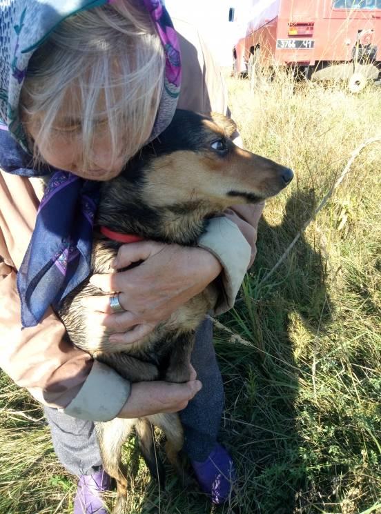 На Дніпропетровщині рятувальники витягли собаку з восьмиметрового колодязя (ФОТО)