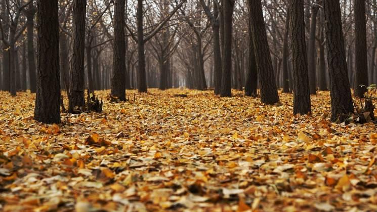 В Краснодарі директорка двох фірм спричинила загибель понад 400 дерев