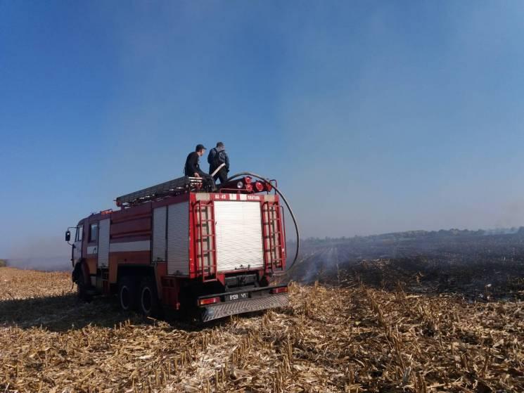 Неподалік Полтави вигоріло кукурудзяне поле