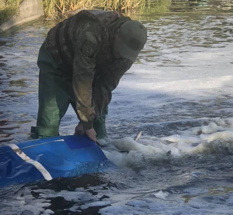 У Дніпрі у річку випустили першу партію мальків риби