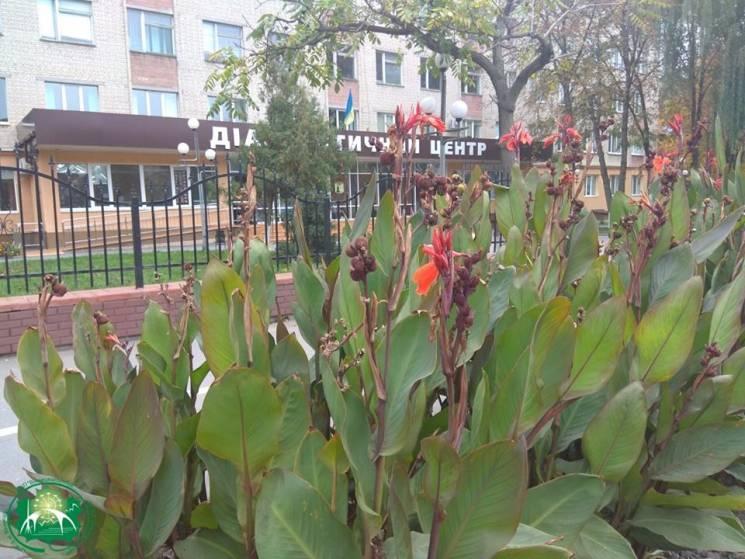 Окрасу вінницьких клумб забрали на зимівлю (ФОТО)