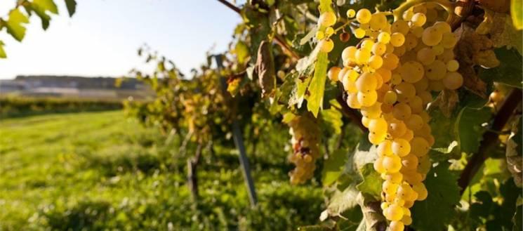 Росія знищує кримські виноградники Судакської долини – результати космічної зйомки