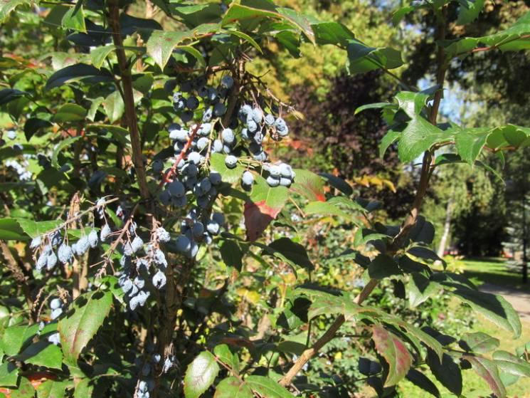 Сонячний осінній день: Якої погоди чекати у Полтаві 13 жовтня