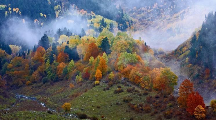 Закарпаття: Прогноз погоди на 13 жовтня - подекуди туман
