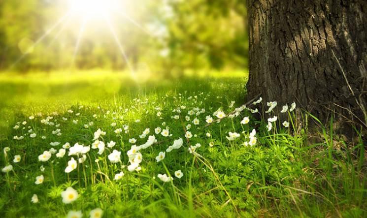 """На свята у Дніпрі продовжиться """"бабине літо"""""""