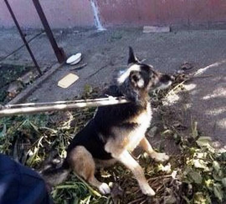 У Дніпрі рятувальники доставали собаку з ями
