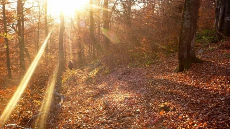 Осінь у Карпатах: Як змінюються високогірні ліси у жовтневу пору (ФОТО)