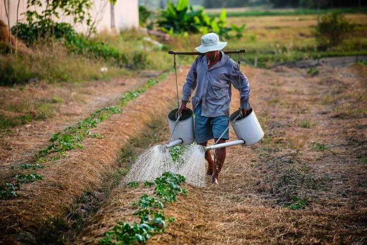 Електричні рослини та енергія лайна: Як у світі долають кризу сільського господарства