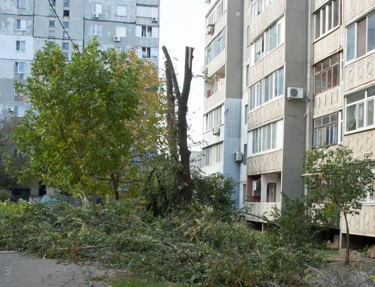 Миколаївці шоковані нещадною обрізкою дерев в Інгульському районі (ФОТО)