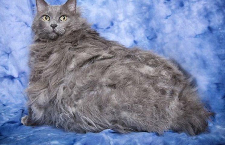 14-килограммовому коту, полностью заплывшему жиром, назначили диету